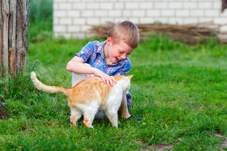 smiling little boy in checkered shirt plays with a red cat Stock Photo