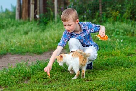 ginger cat: child feeding homeless ginger cat Stock Photo