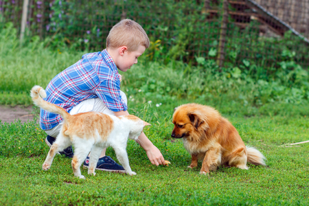 feeds: little boy feeds the stray cat and red-haired homeless dog Stock Photo