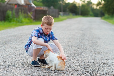 amigos abrazandose: little boy stroking white and a red cat on a rural asphalt road Foto de archivo