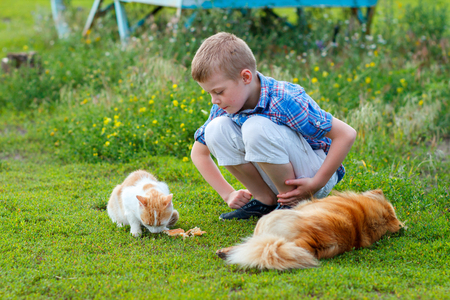 plaid shirt: smiling little boy in a plaid shirt feeds homeless cat and redhead stray dog in the yard, dog lies, cat - eats