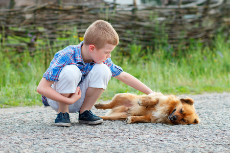 stroking: little boy in a plaid shirt stroking a red dog, dog lying on asphalt road. Best friends. Outdoor Stock Photo