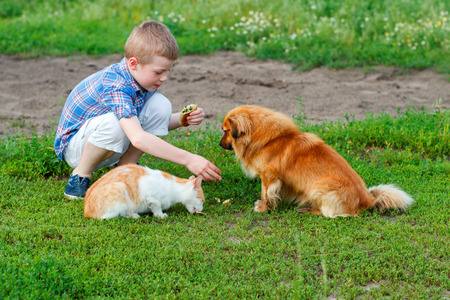 boy in a plaid shirt feeding the cat and dog in the yard