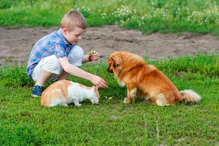 plaid shirt: boy in a plaid shirt feeding the cat and dog in the yard