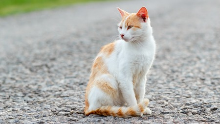 Homeless red cat sitting on the warm asphalt road. Stray cat turned his head and looks attentively to the side. Sunset