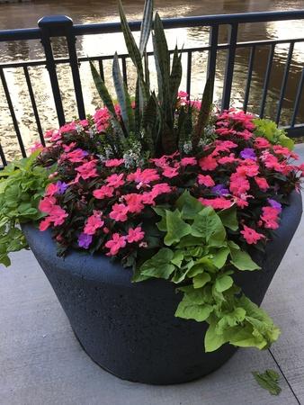 Floral arrangement in the river walk in Milwaukee, Wisconsin.