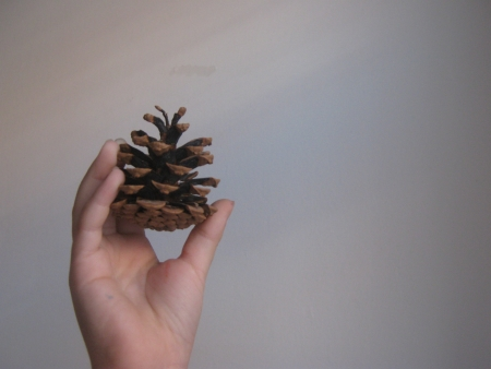 forest management: Childrens hand holds a pine cone