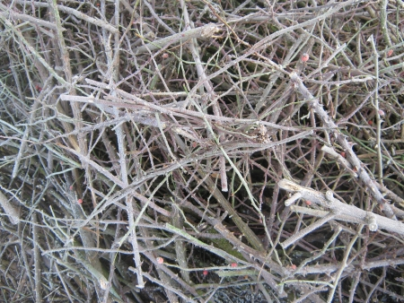 Frosted brushwood photo