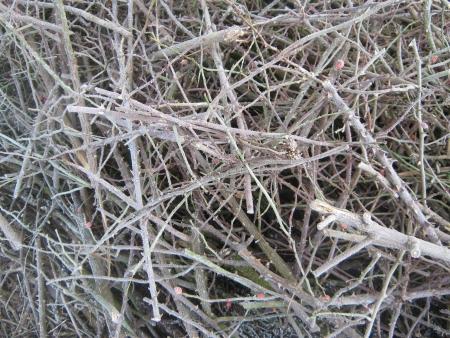 brushwood: Frosted brushwood