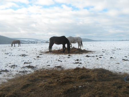 Couple of horses in snowy landscape photo