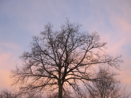 Tree silhouette front a red sky Stock Photo