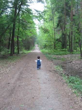 Little boy on the forest trail
