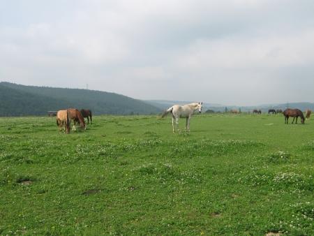 Horses in free range photo