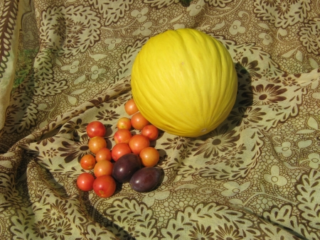 Yellow sugar melon in autumn composition with plums and cherry plums photo