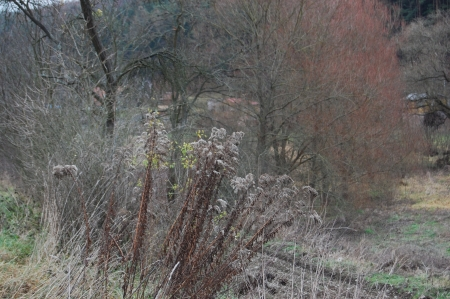 furrow: Winter dry meadow with a plowed furrow with dried plants and red willows Stock Photo