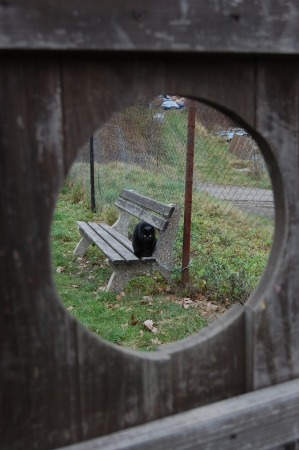 View through a hole in a wooden board - beautiful black shorthaired cat with a winter coat sitting on the bench photo