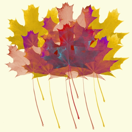 Autumn theme of colored maple leaves on light yellow background photo