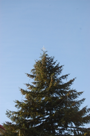 Tall coniferous tree with Christmas ornaments photo