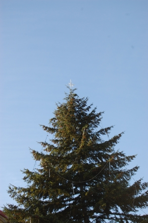 Ornate tall Christmas spruce photo