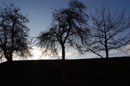 trio: Threesome �rboles en horizonte Foto de archivo