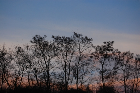 series of silhouettes of trees on the horizon with blue sky and alpenglow pinkish mist photo