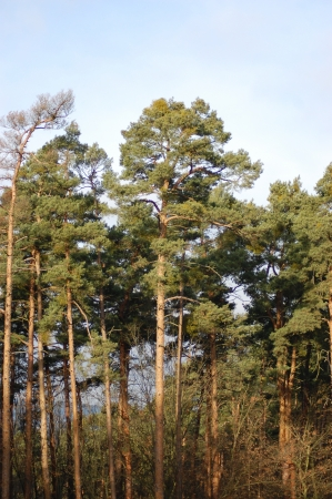 forest management: Sunny treetops on horizon