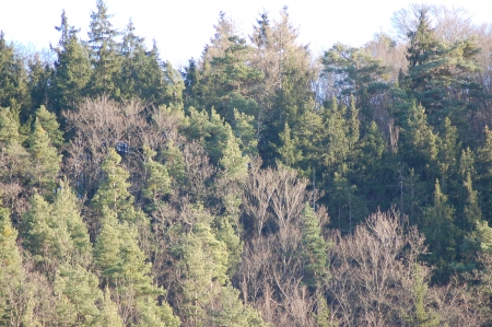 of irradiated: Wooded horizon