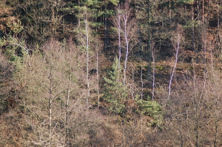 irradiated: Wooded hillside