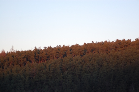 of irradiated: Forested horizon red irradiated by sun Stock Photo