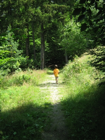 Little boy on forest path Stock Photo - 24984063