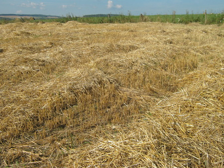 Mown straw on the field with visible horizon  photo
