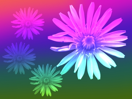 Abstract background in rainbow tones with dandelion flower photo