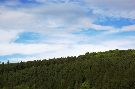 forested: Forested horizon Stock Photo