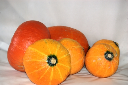 Orange and yellow pumpkins