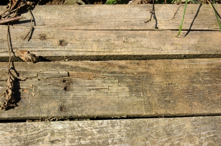 Texture of the old plate of planks photo