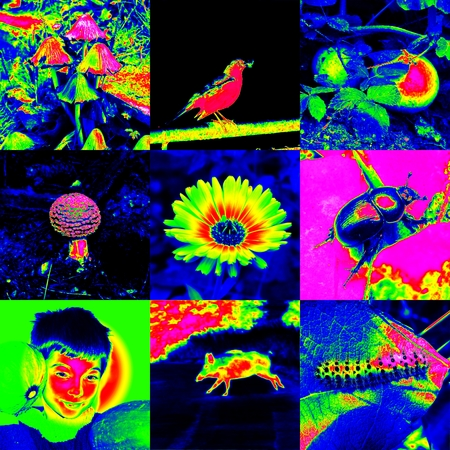 thermogram: Infra color images set background