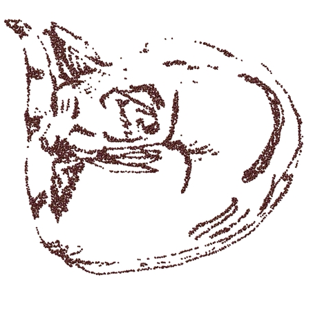 curled up: Sleeping cat curled up - coffee beans - computer modified sketch Stock Photo