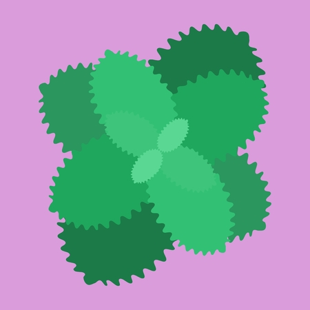 chocolate mint: Sprout sprig of mint plant with leaves on a pink background.