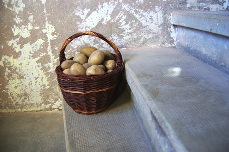 functionalism: Retro stylized photo of raw potatoes in wicker basket on grunge old stairs