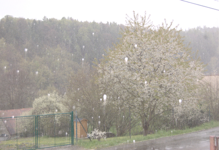 topics: BOJOV, MNISECKO (CENTRAL BOHEMIA), CZECH REPUBLIC - APRIL 28 - 16 CET: Spring storm with snow and hail amidst blossoming trees. Illustrative photo for meteorological, weather and climate topics.