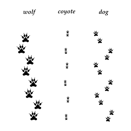 Comparison of wolf, coyote and dog trails. Illustration