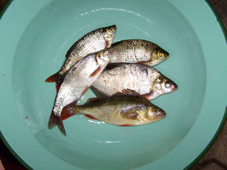 Fish - bream, perch, vimba and roach in mint green bowl - fishing trials - we recognize the different types of fish Stock Photo