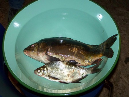 Carp and bream in big bowl