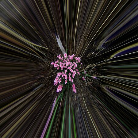 Abstract radiant centralized floral background Stock Photo
