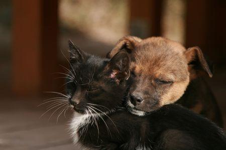 amor adolescente: Gatito y cachorro so�ando juntos  Foto de archivo