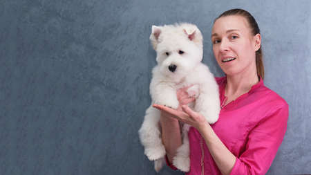 young girl groomer shows off West Highland White Terrier puppy after first grooming procedures. funny cute West Highland White Terrier puppy