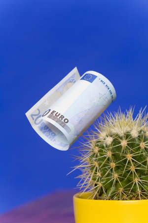 spines: Cactus with a twenty Euro banknote on its spines, close up LANG_EVOIMAGES