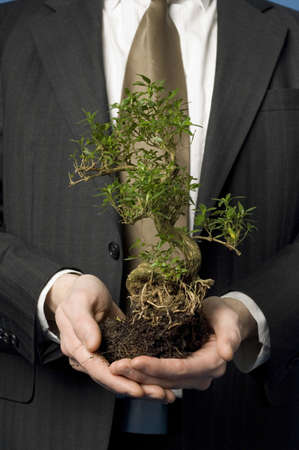 Midsection of businessman holding bonsai Stock Photo - 3193354