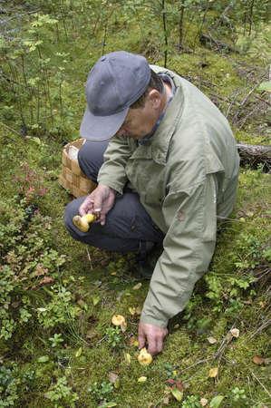 mushroom picking: Senior man picking wild mushrooms