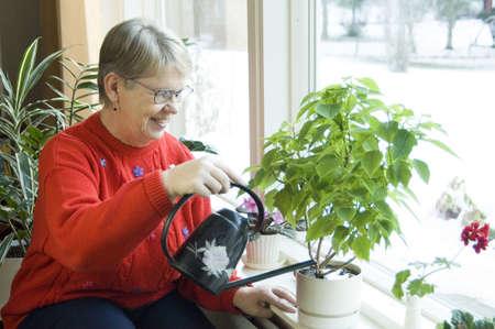 indoors: Senior woman watering plant